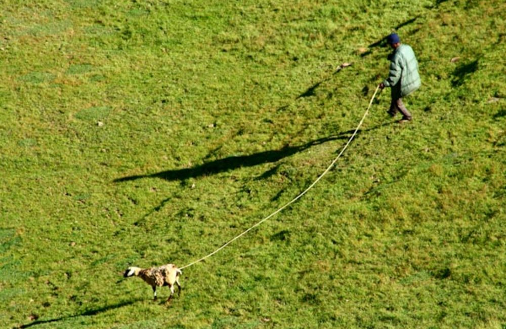 A farmer in Maubesi leads his goat to pasture. Photo by UNMIT/Bernardino Soares
