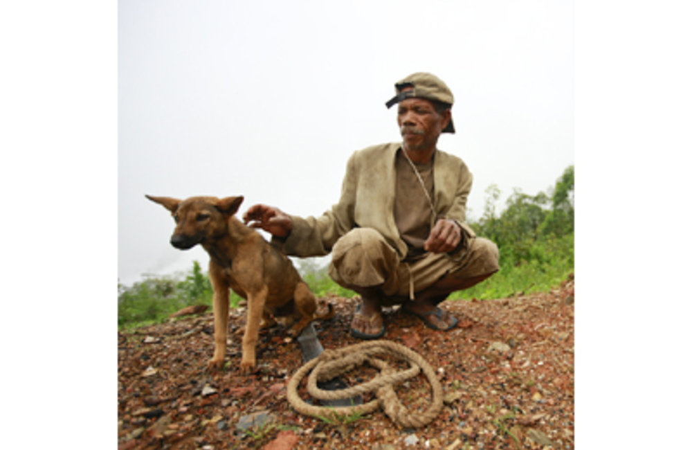It is a common practice for Timorese farmers to have working dogs to help out in jobs ranging from l