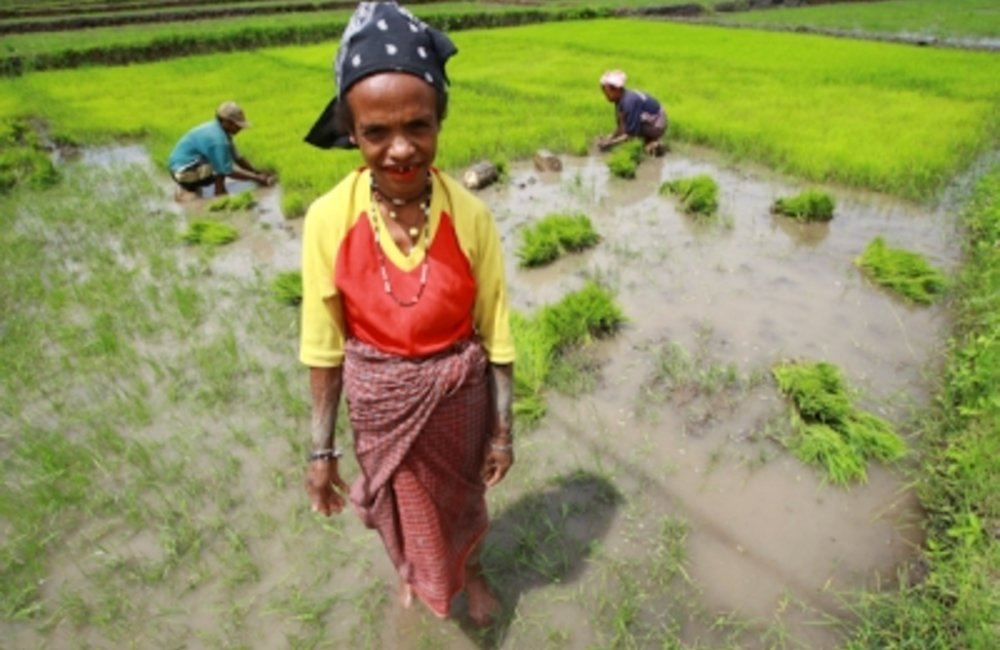 A farmer from Aileu stands in front of her rice field. Photo UNMIT/Martine Perret