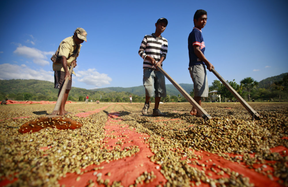Workers from CCT/NCBA stand in the coffee drying field in Tibar.Photo by UNMIT/Martine Perret