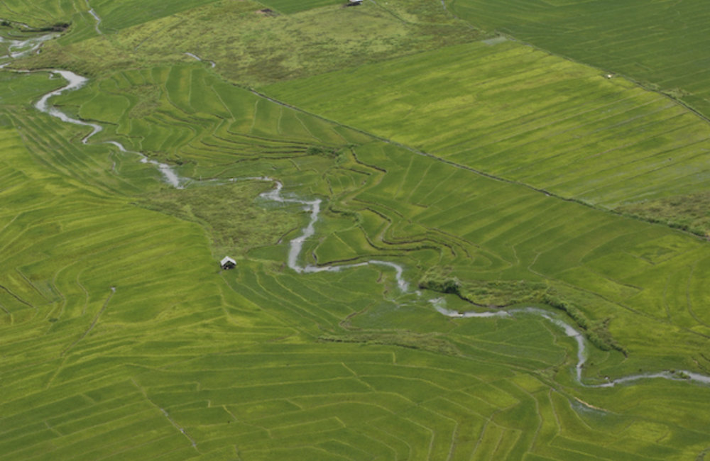 An aerial shot of a rice field in Maliana. Photo by Bernardino Soares/UNMIT