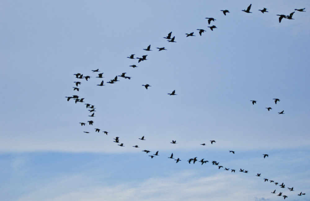 A flock of birds migrating as the season changes. Photo by UNMIT/Bernardino Soares