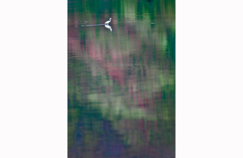 An egret gliding over the small body of water in Tasi-tolu, Dili. The Tasi-tolu lake includes three