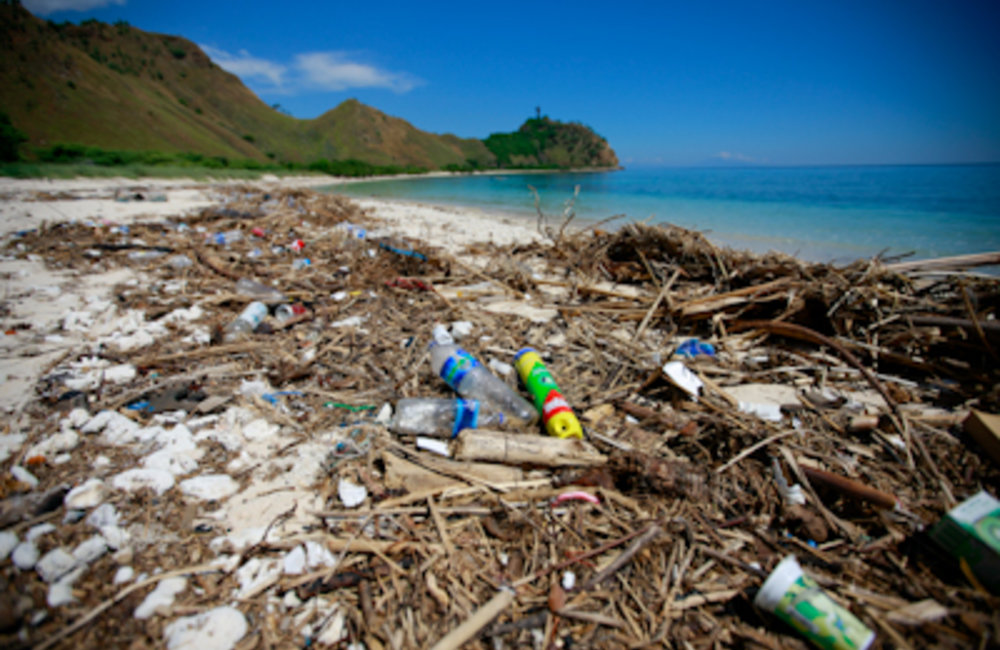 World Environment Week: