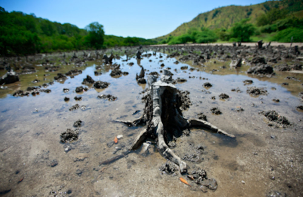 World Environment Week: Mangrove forests are one of the most productive ecosystems in the world. The