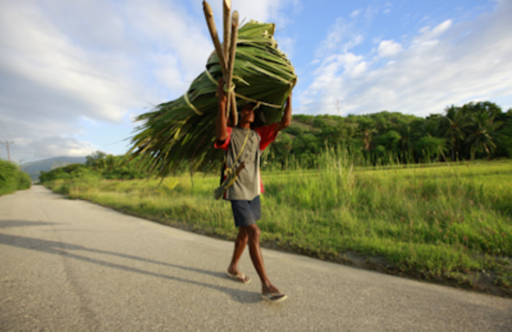 A farmer in Manatuto carrying the thick leaves of the native akadiru tree. Photo Martine Perret/UNMI