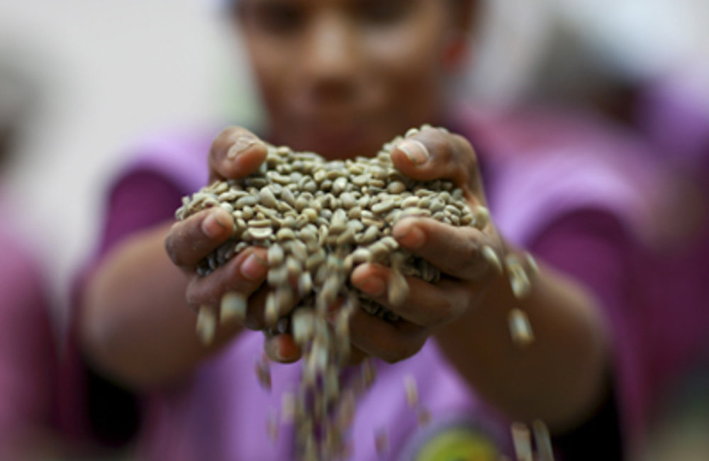 Worker at a coffee factory in Dili processing coffee beans.Photo UNMIT/Martine Perret