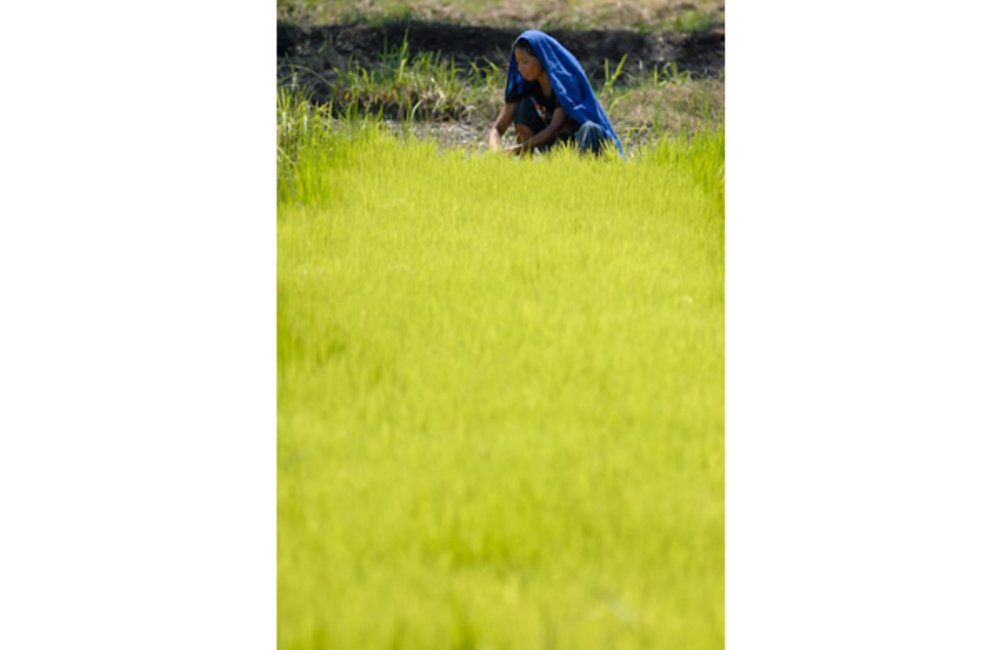 A farmer from Suai working in her rice fields, Photo by UNMIT/Bernardino Soares