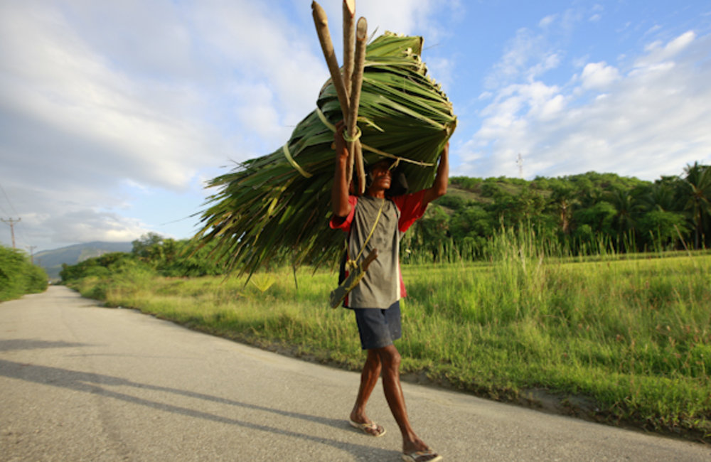 A farmer from Manatuto carries palm leaves to build his roof. Photo by UNMIT/Martine Perret