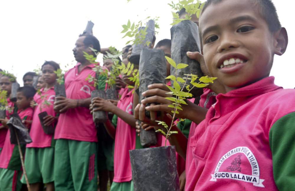 Primary school students from Lalawa suco plant trees in Covalima. Photo by Domingos Da Costa/ UNMIT