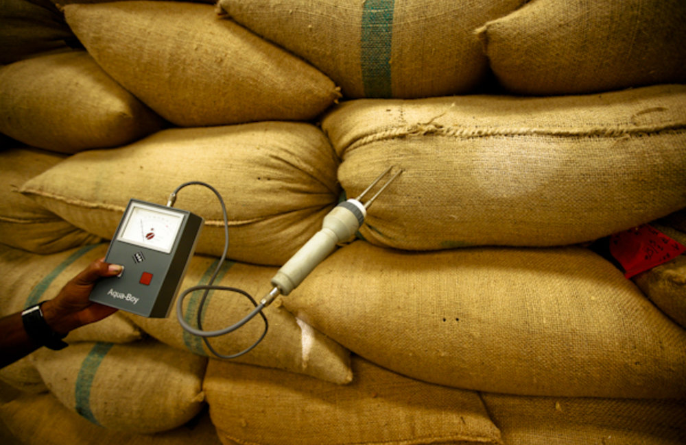 An employee from the Cooperativa Café Timor, CCT, uses a moisture tester at a coffee warehouse in T