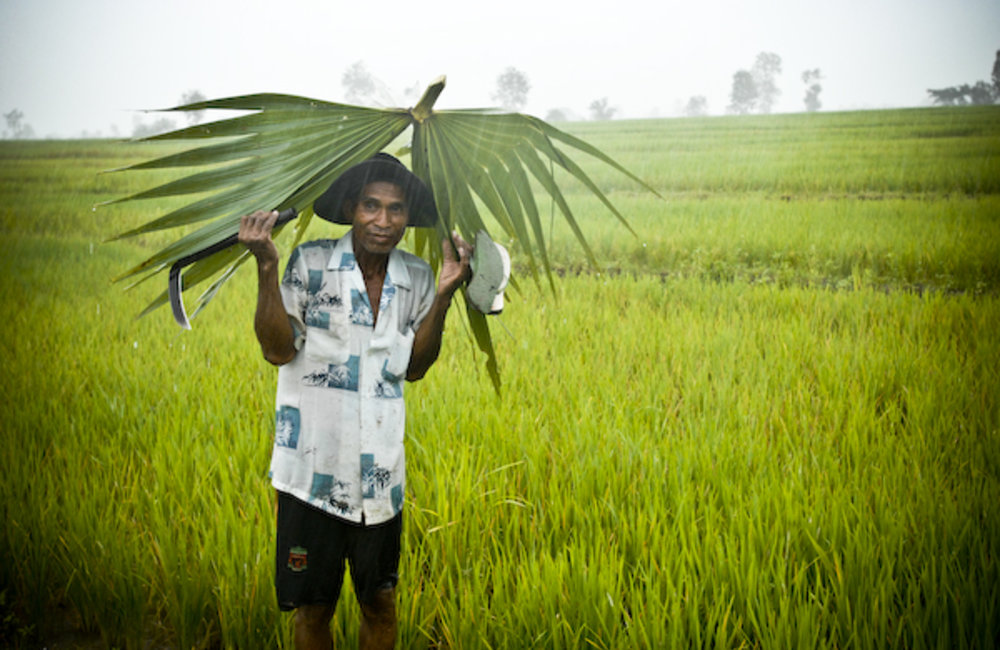 A farmer from Maliana uses a palm leaf  as shelter from the rain. Photo UNMIT/ Benardino Soares