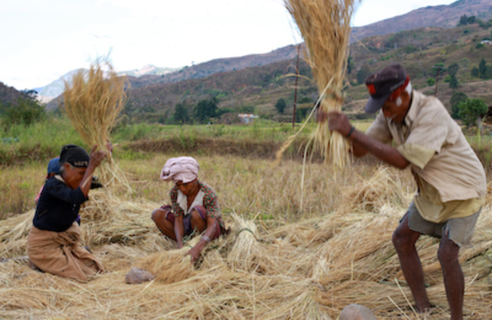 Some of the underlying causes of rural poverty can be linked to an underdeveloped agricultural secto