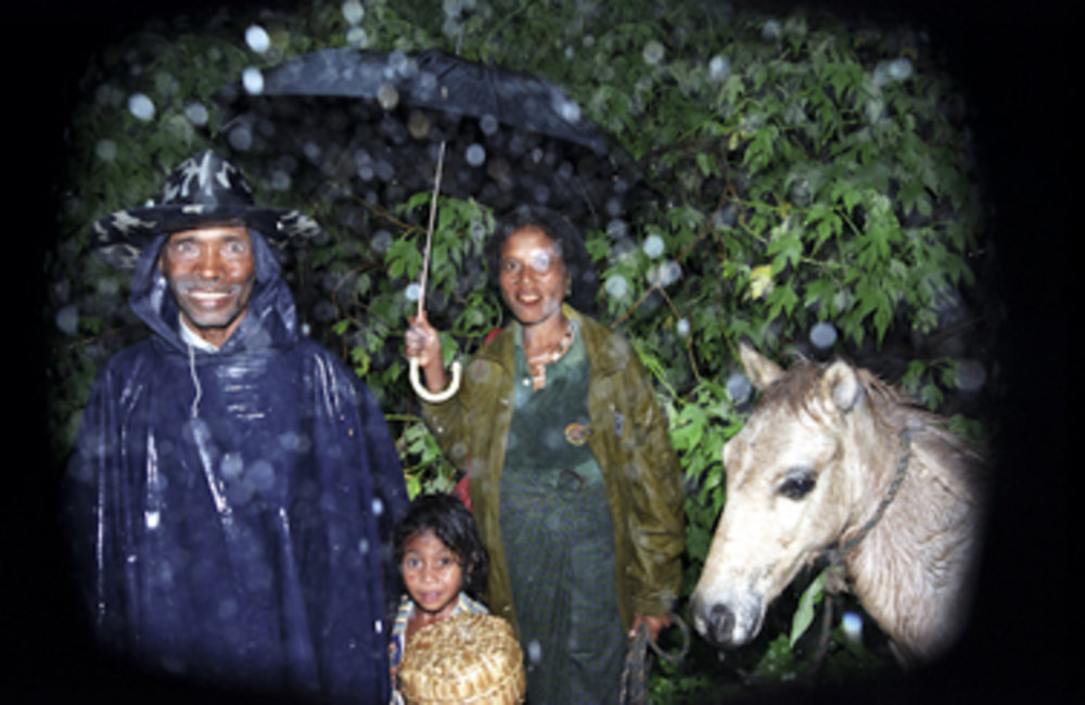 The Timor pony likely originated from the breed of Indian horses and ponies introduced on the island