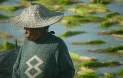According to the FAO, Timorese farmers produce less than half of the rice needed to feed the populat